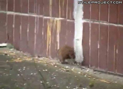 You evil rat!